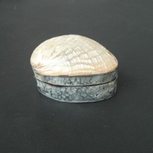 Boite en coquillage blanc cassé 4,00 x 6,30 cm